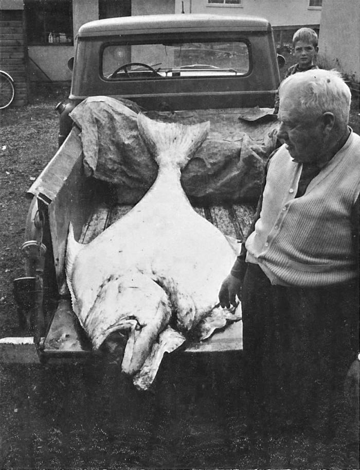 Þórður á Sæbóli að koma með lúðu í fiskbúðina